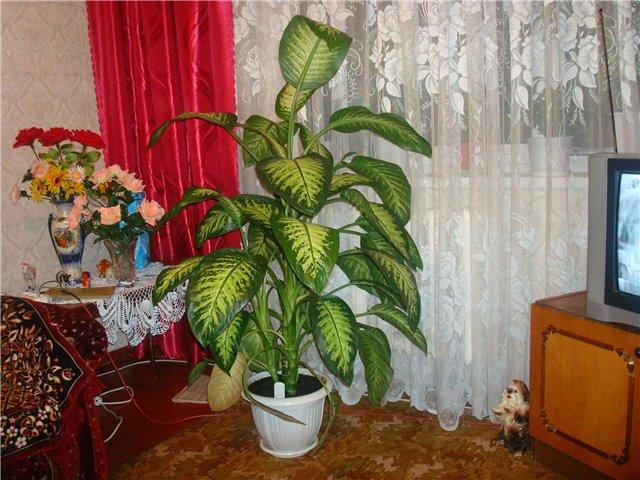 Leutar.net Ova sobna biljka može ubiti dijete za nekoliko minuta!