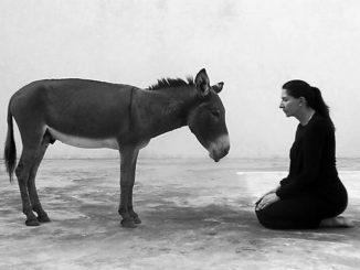 Leutar.net Sat vremena gleda u magarca, a Srbija joj za to platila 80.000 evra