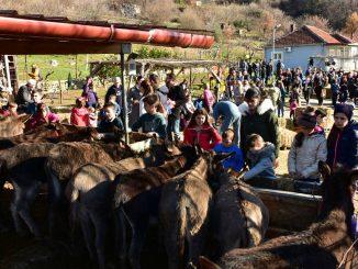 Leutar.net Farma magaraca: Tamo gdje magarci uživaju i iscjeljuju