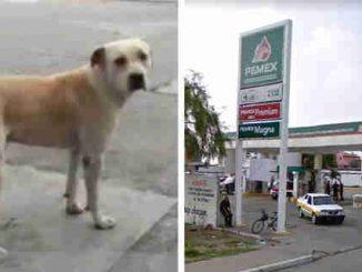 Leutar.net Pas lutalica kojeg su usvojili radnici na benzinskoj pumpi spriječio oružanu pljačku