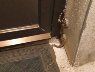 Leutar.net Hercegovca na vratima dočekao poskok