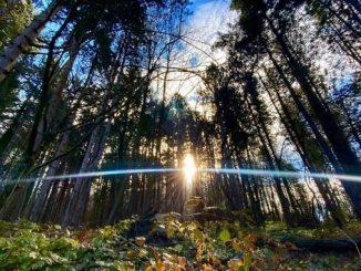 Leutar.net Danas je Svjetski dan šuma, 21. mart: Čuvajmo šume, jer one čuvaju nas