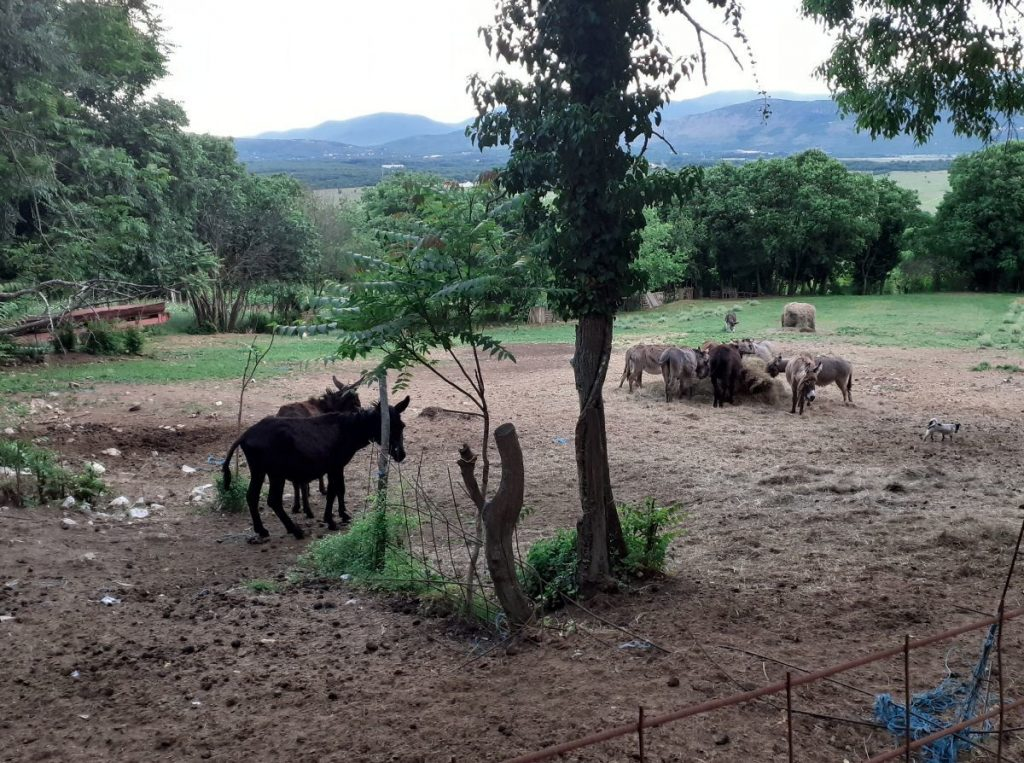 Leutar.net Imam 102 magarca, proizvodim mlijeko i uživam u svom poslu
