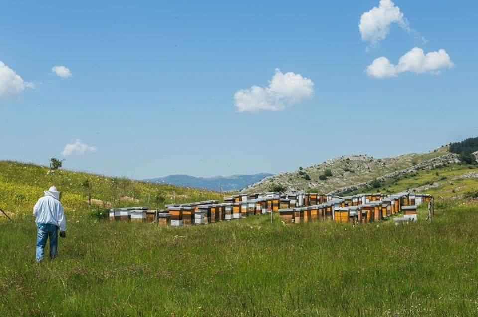 Pčelarstvo Bajović - planinska ispaša
