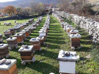 Leutar.net Pčelarstvo Bajović i zlatne kapi hercegovačkog krša