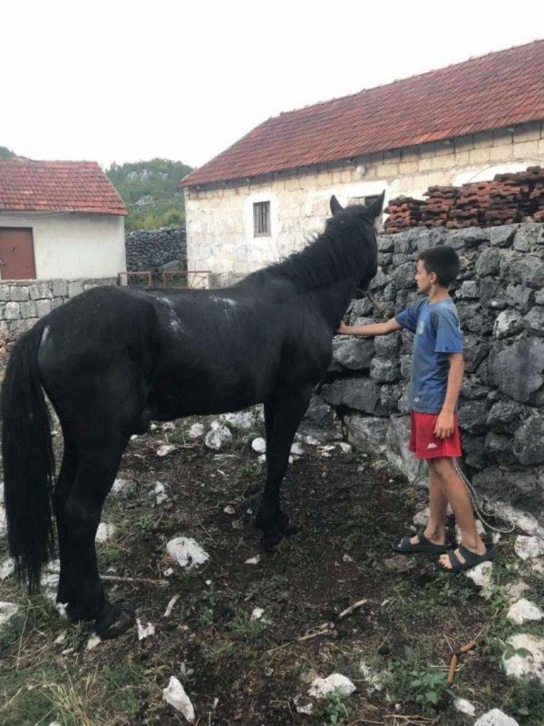 Leutar.net SRPSKI MOGLI OPČINIO TREBINJCE: Uroš (12) pojio goveda, plastio sijeno i okopavao!