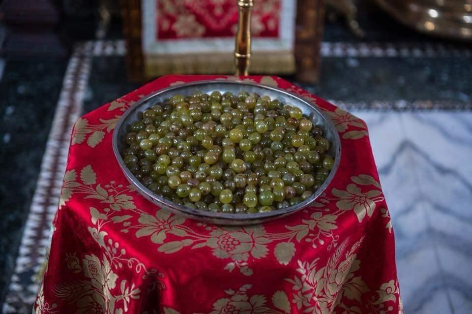 Leutar.net Убирање плодова са лозе Светог Симеона Мироточивог, најстарије винове лозе на свијету