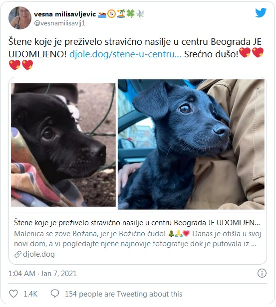 Leutar.net Udomljeno štene koje je preživjelo nasilje, a Srbija traga za počiniocem (FOTO i VIDEO)