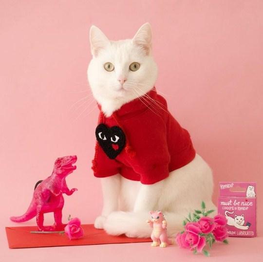 Leutar.net Upoznajte Zappu, najbolje stilizovanu i najfotogeničniju mačku na Instagramu