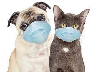 Leutar.net Istraživanje pokazalo da je Covid-19 uobičajan kod mačaka i pasa